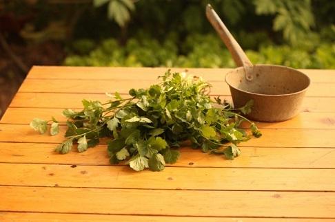 vegetable-coriander-agriculture-herb-fresh