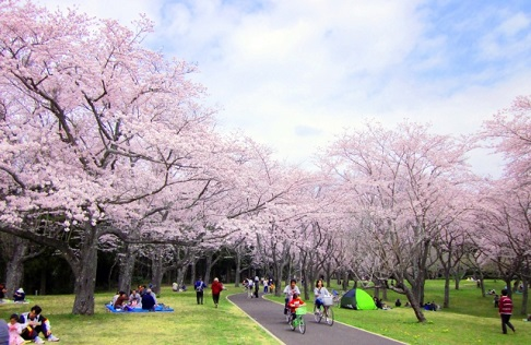 人が少ない静かな公園